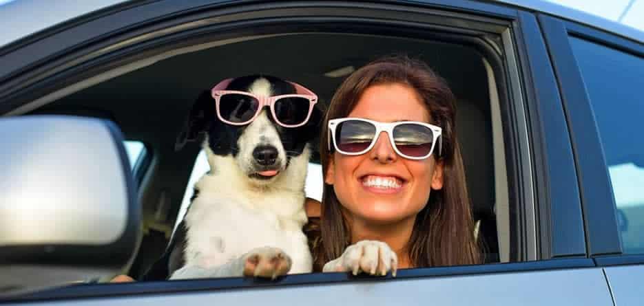 Dog friendly car hire